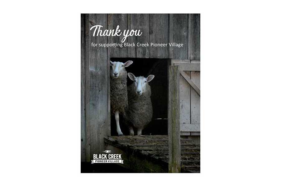 Lamb at Black Creek Pioneer Village postcard