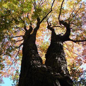 Altona Forest