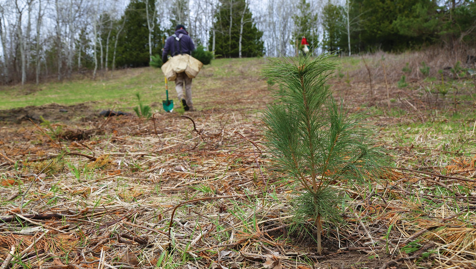 TRCA field staff work on reforestation project