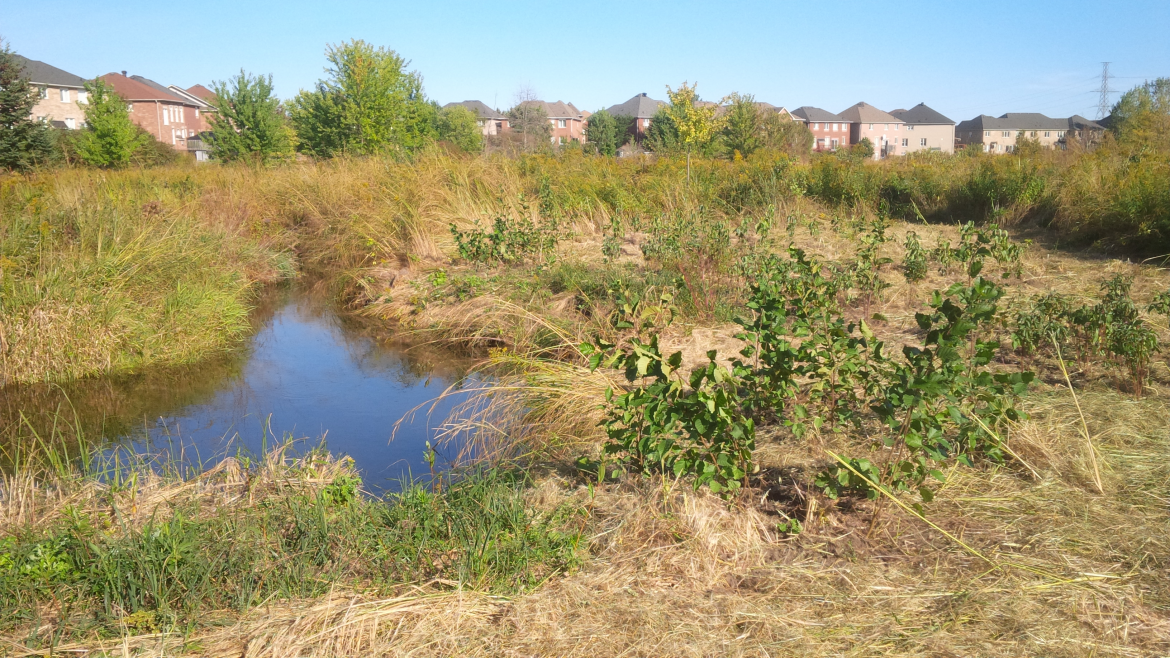 A naturalized area next to a subdivision