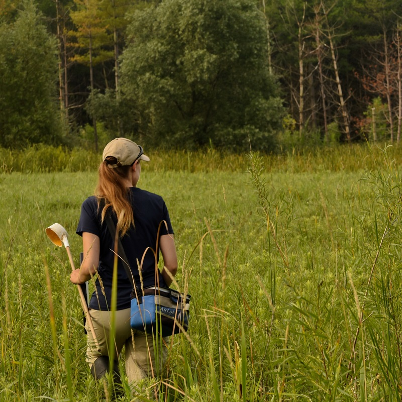 TRCA team member conducts West Nile Virus monitoring and surveillance in local wetland